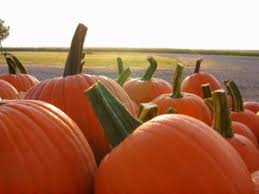 Great Pumpkin Patch Arthur Il by Springfield Moms Dads Grandparents Free Family Resources For
