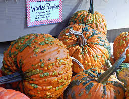 Maize Valley Pumpkin Patch by Fall Archives Melissa Kaylene