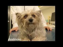 riser animal hospital riser animal hospital emil e baukert dvm skokie il 60077 3247