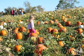Pumpkin Patch Pittsburgh Pa 2015 by Frugal Foodie Mama Family Fall Fun At Triple B Farms