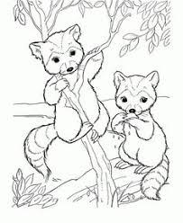 Free Cute Raccoon Cartoon Animal Coloring Pages Printable