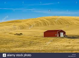 Red Barn In The Middle Of A Wheat Field In Eastern Washington ... Red Barn Washington Landscape Pictures Pinterest Barns Original Boeing Airplane Company Building Museum The The Manufacturing Plant Exterior Of A Red Barn In Palouse Farmland Spring Uniontown Ewan Area Usa Stock Photo Royalty And White Fence State Seattle Flight Interior Hip Roof Rural Pasture Land White Fence On Olympic Pensinula