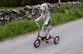 Dog Riding Bike GIF