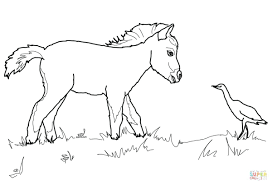 Printable Horse Jumping Coloring Pages Picture Of A Horseshoe Miniature Foal Bird Page Head Profile