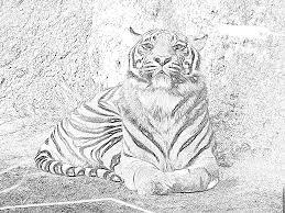 Coloriage Zoo Tigre à Imprimer Pour Les Enfants Dessin