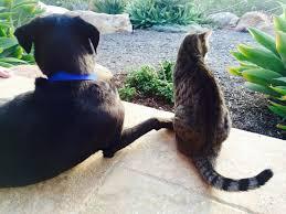Why Do Puggles Shed So Much by Breed Comparison Labrador Retriever Vs Golden Retriever Rover Com