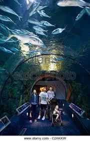 Texas Galveston Moody Gardens Aquarium Stock s & Texas