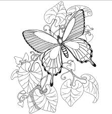 Butterfly Fairies Coloring Pages Printable