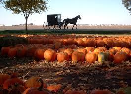 Pumpkin Patch In Homer Glen Illinois by Best Local Pumpkin Patches