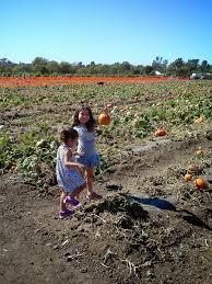 Pumpkin Patch Corona Ca by Petting Zoo Archives Project Refined Life