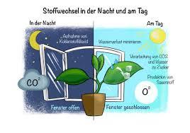 pflanzen im schlafzimmer schöne zimmerpflanzen tipps und
