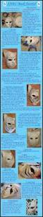 Halloween Half Mask Ideas by Best 25 Cat Mask Ideas On Pinterest Paper Mask Et Mask And How