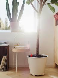 mit pflanzen dekorieren natur für dein zuhause ikea