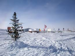 What Is The Best Christmas Tree Food by Christmas In Antarctica