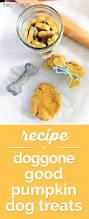 Cookie Clicker Beta Halloween by Best 10 Dog Pumpkin Ideas On Pinterest Pumpkin Dog Treats Easy