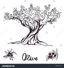 hand drawn ink olive tree vector eps 10