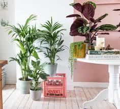 große zimmerpflanzen kostenlos geliefert plantsome