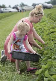 Summers Pumpkin Patch Frederick Md by Strawberry Season Frederick County Farms Let Families Pick Their