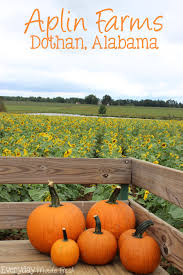 Best Atlanta Area Pumpkin Patch by Aplin Farms Dothan Alabama Everyday Made Fresh