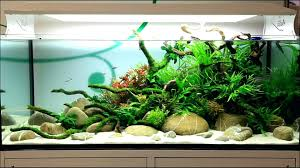 Aquarium Aquascaping Aquariums Archives Beck Designs Appartment ... Out Of Ideas How To Draw Inspiration From Others Aquascapes Aquascaping Aquarium The Art The Planted Plant Stock Photo 65827924 Shutterstock Continuity Aquascape Video Gallery By James Findley Green With River Rocks Aqua Rebell Qualifyings For 2015 Maintenance And Care Guide Outstanding Saltwater Designs 2012 Part 1 Youtube Dennerle Workshop Fish