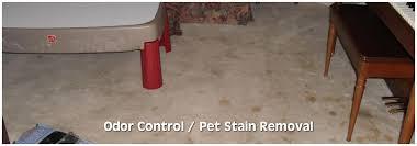 karl s odor pet stain removal cat urine remover cat