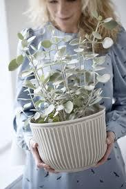 trend pflanzen deko tipps connox magazine wohnzimmer