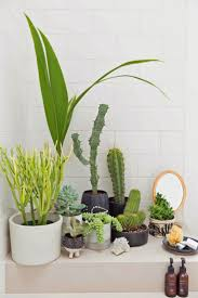 Plants For Bathrooms With No Light by Real Indoor Plants Online Bathroom No Sunlight How Much Light Do
