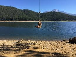 Vacation Inspiration Lake Siskiyou near Mount Shasta 510 Families