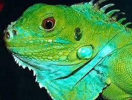ein krokodil fürs wohnzimmer freie presse tiere