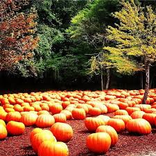 Pumpkin Patch College Station 2014 by 36 Best Pumpkin Patches Images On Pinterest Athens Atlanta And