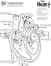 Anatomical Heart Coloring Pages Of The Human Free Printable Anatomy