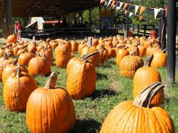 Northern Illinois Pumpkin Patches by Enjoy Pumpkin Farms Hayrides And More Near Naperville