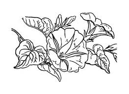 Lilac And Lavender Colouring Page