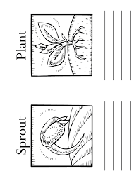 Flower Growing Coloring Pages How Do Plants Grow Blank Book Pg Woo Jr Kids Activities