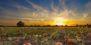Bishop Pumpkin Patch Lincoln Ca by Home Run Your Gourd Off