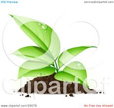 Clipart Illustration of an Organic Seedling Plant With Dew Its Green Leaves Growing From A Pile Dirt by beboy