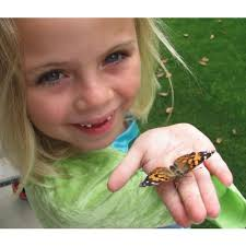Insect Lore Live Butterfly Garden Toys for Science