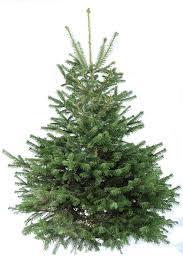 Best Christmas Tree Type Uk by Log Un Sticks Firewood Suppliers