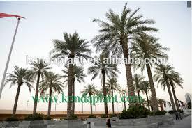 prix des palmiers exterieur hight qualité avec pas cher prix artificielle grand arbre