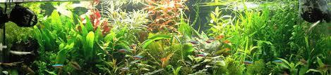 aquarium d eau douce plantes d aquarium d eau douce pour les débutants