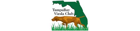 When Do Vizslas Shed Their Puppy Coat by Are You Sure You Want A Vizsla U2013 The Tampa Bay Vizsla Club