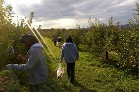 Pumpkin Picking Ridge Ny by 5 Easy Apple Picking Day Trips From Nyc