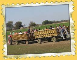 Northern Illinois Pumpkin Patches by Northern Illinois And Southern Wisconsin Pumpkin Patches Offer