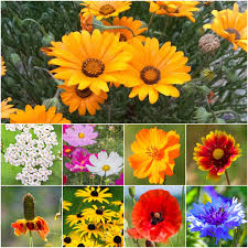 Dryland Wildflower Mixture Pob Spring Cleaning Sale 20 Off All Catalog Items Through March 27 California Found February 2018 Subscription Box Review Coupon Eden Brothers Seed Company 15 Color Based Mixes Milled Wildflower Apparel And Co Coupons Promo Discount Codes Serenbe Playhouse The Meadow Tickets Coupons 3 For 2 Wedding Clipart Marriage Words Clip Art Save The Date I Love You Mr Mrs Thank Handdrawn Digital Seafoam Flower Pink Shabby Chic Digitally Hand Drawn For Invitations Valentines Day Vtagepink Purchase David Tutera Personalized Foil Clear Case Cover Milkyway Nature Hills Coupon Code Wdst Restaurant Deals For Pandora Wildflower Murano Charm Af682 30642 Cbd And Thc Soap Vaporizers Capsules