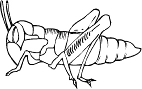 Free Bug And Insect Coloring Pages