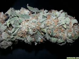 Christmas Tree Cataract Myotonic Dystrophy by 420 Magazine U0027s Nug Of The Month January 2013