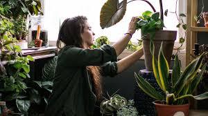 diese 6 zimmerpflanzen sind gut für unsere gesundheit