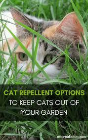 Best 25 Cat repeller ideas on Pinterest