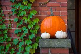 Portland Tn Pumpkin Patch by Corey Templeton Photography Patch Of Pumpkins