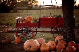 Pumpkin Patch South Bend by Fall Into Fun This Weekend Only In Arkansas